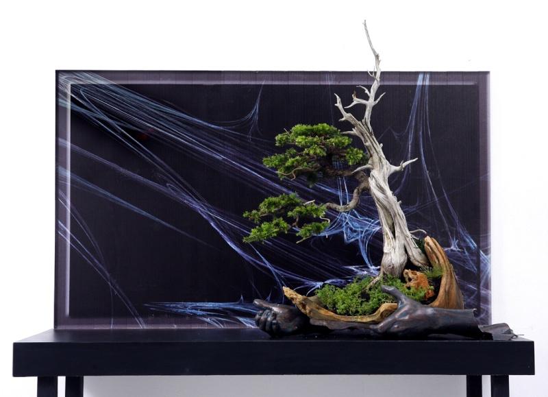 Multimedia Bonsai Presentation - IBA&CB 2014 4210