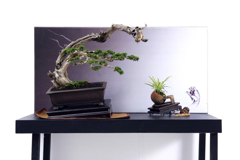 Multimedia Bonsai Presentation - IBA&CB 2014 4310