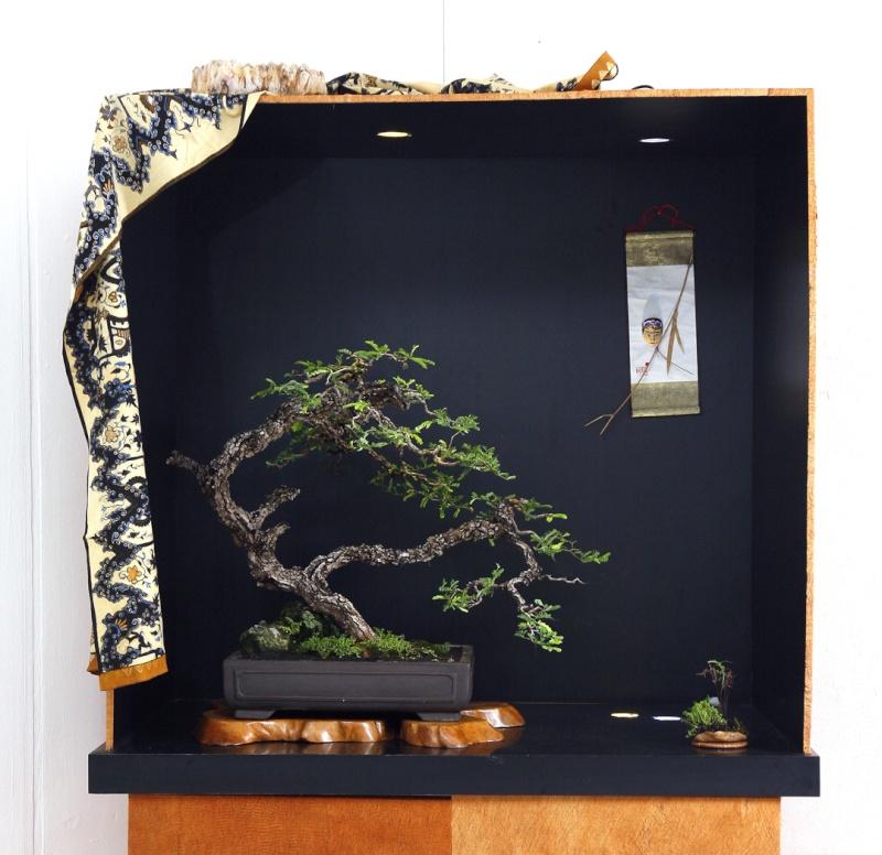 Multimedia Bonsai Presentation - IBA&CB 2014 5810