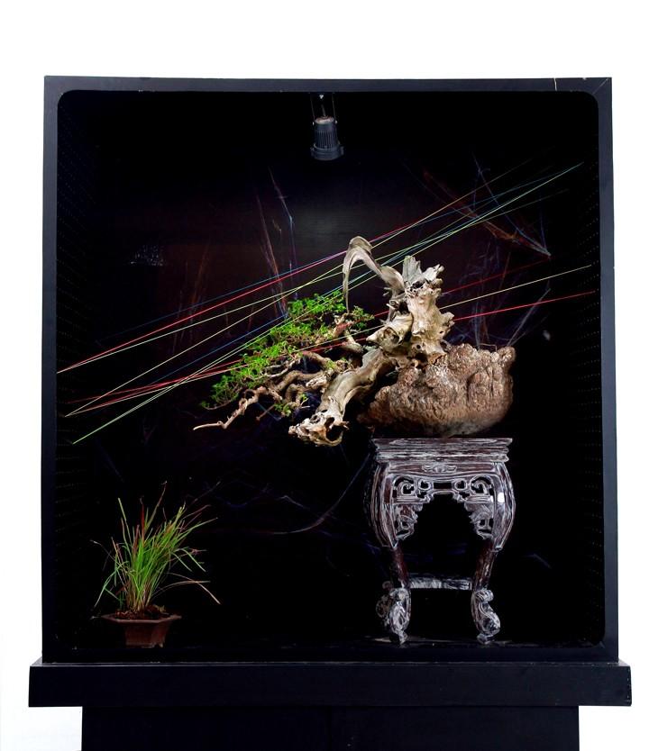 Multimedia Bonsai Presentation - IBA&CB 2014 8910
