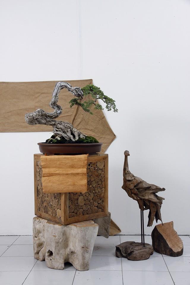 Multimedia Bonsai Presentation - IBA&CB 2014 N10
