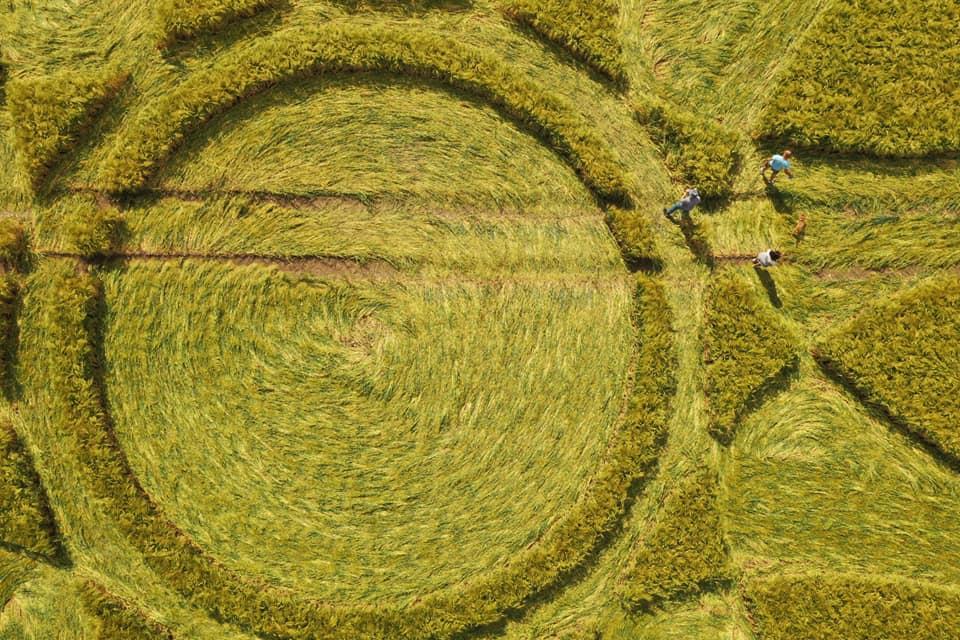 crop circles 2020 10420410