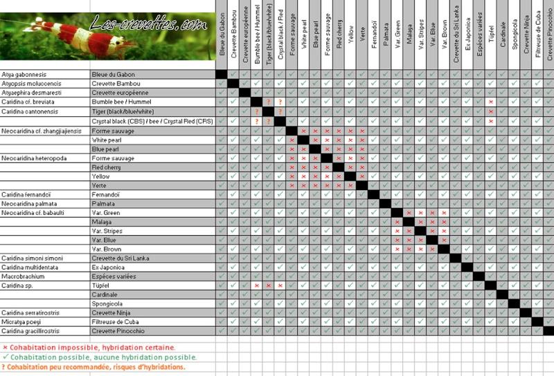 Remise en eau aquarium 25L - Page 4 Hybrid10