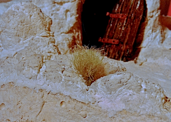 Die vermeintliche Räuberbande - Seite 2 Gras0610