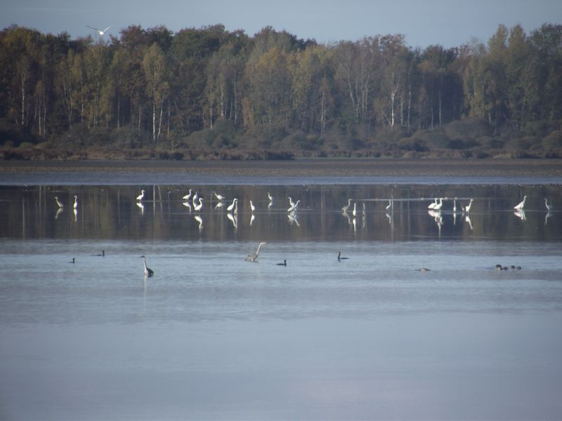 Mes observations d'oiseaux... Dscf5021