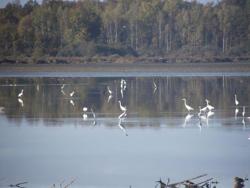 Mes observations d'oiseaux... Dscf5022