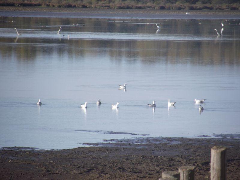 Mes observations d'oiseaux... Dscf5116