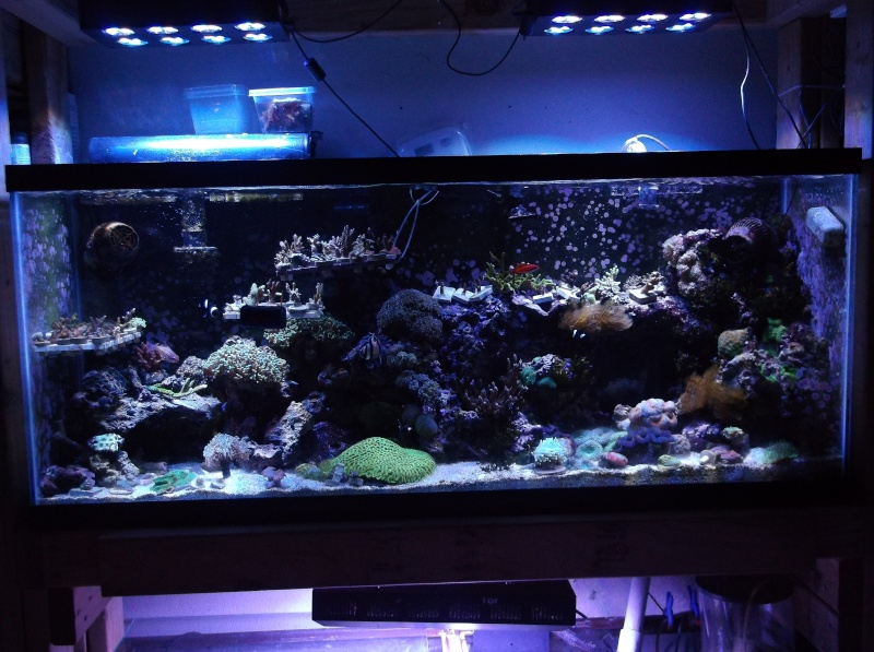 55 Nano Reef Rebuild Dscf8910