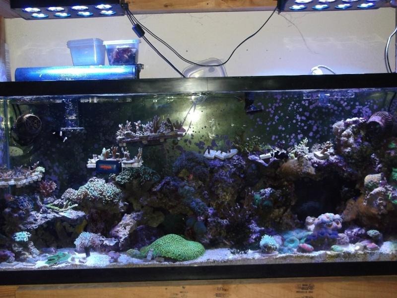 55 Nano Reef Rebuild Dscf9012
