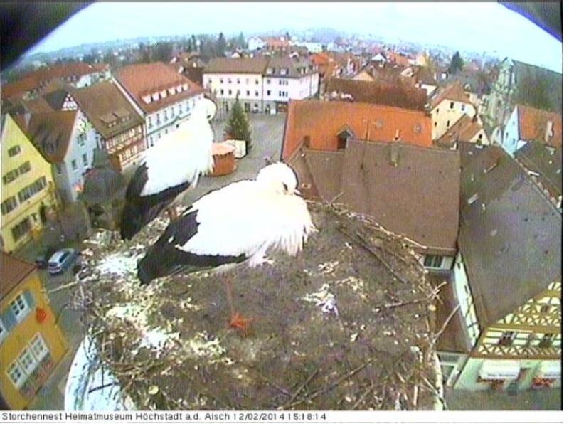 Wildtier-Livecams - Seite 5 Storch10