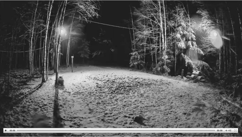 Wildtier-Livecams - Seite 5 Wutz110