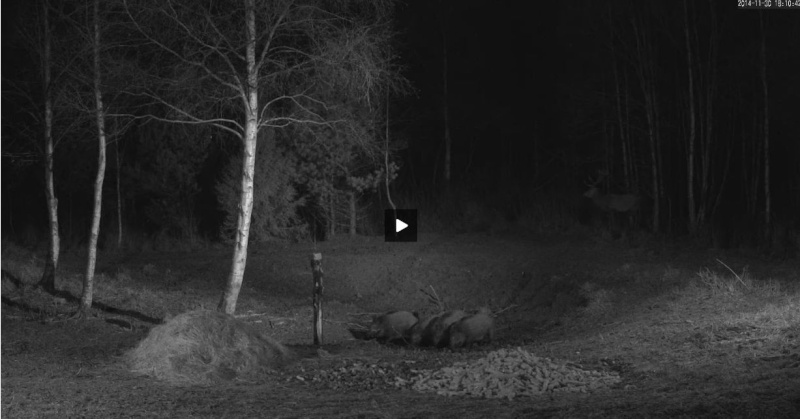 Wildtier-Livecams - Seite 5 Wutz310