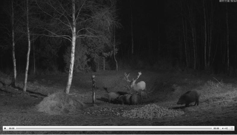 Wildtier-Livecams - Seite 5 Wutz410