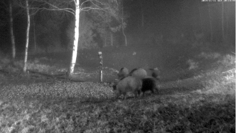 Wildtier-Livecams - Seite 4 Ww410
