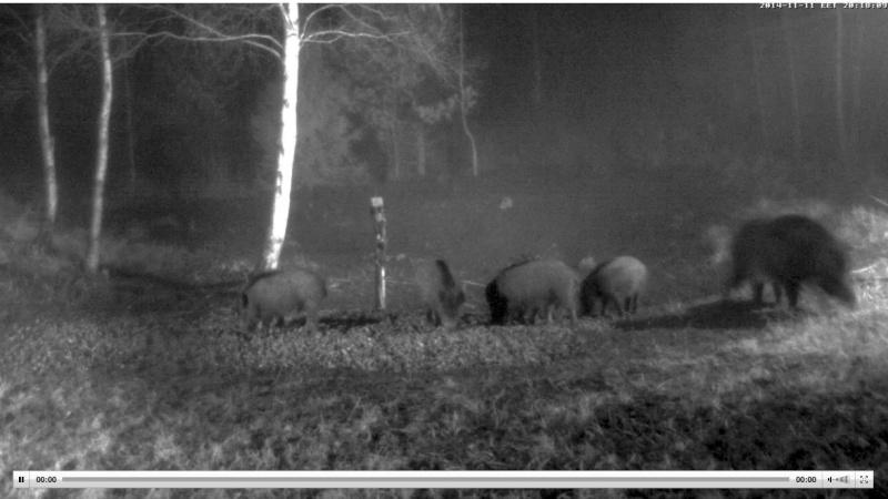 Wildtier-Livecams - Seite 4 Ww610