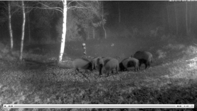 Wildtier-Livecams - Seite 4 Ww810