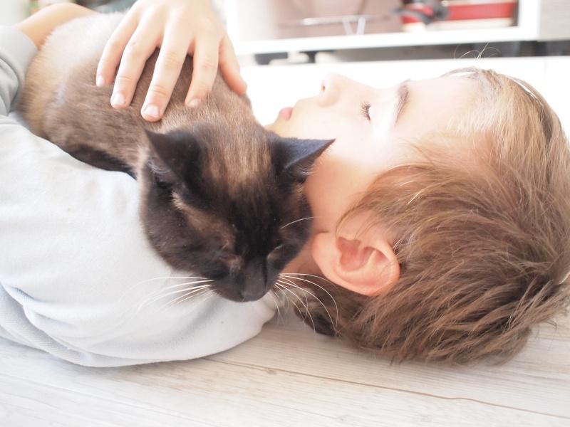 Gringo, chat croisé siamois fauve et blanc, né en 2011 Pb092610