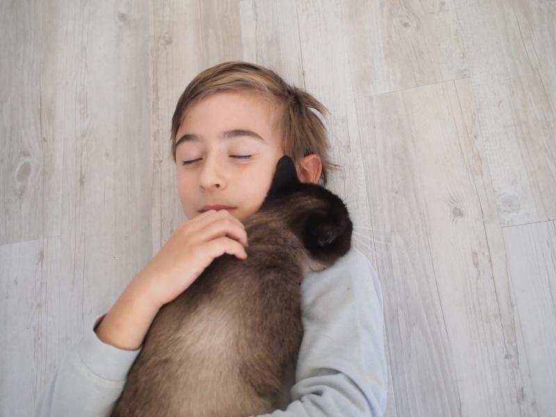 Gringo, chat croisé siamois fauve et blanc, né en 2011 Pb092611