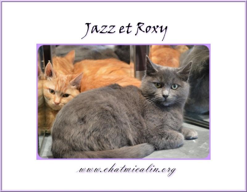 Tous nos adoptés en image Jazz_e10