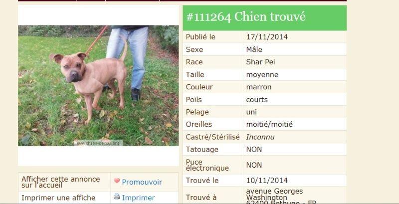 jeune mâle trouvé dans  le 62 / Pas de Calais Trouvy10