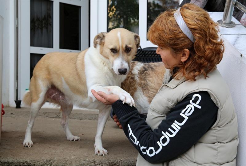 Murmurica, sauvetage de Sanda, chienne née en 2011 Murmur16