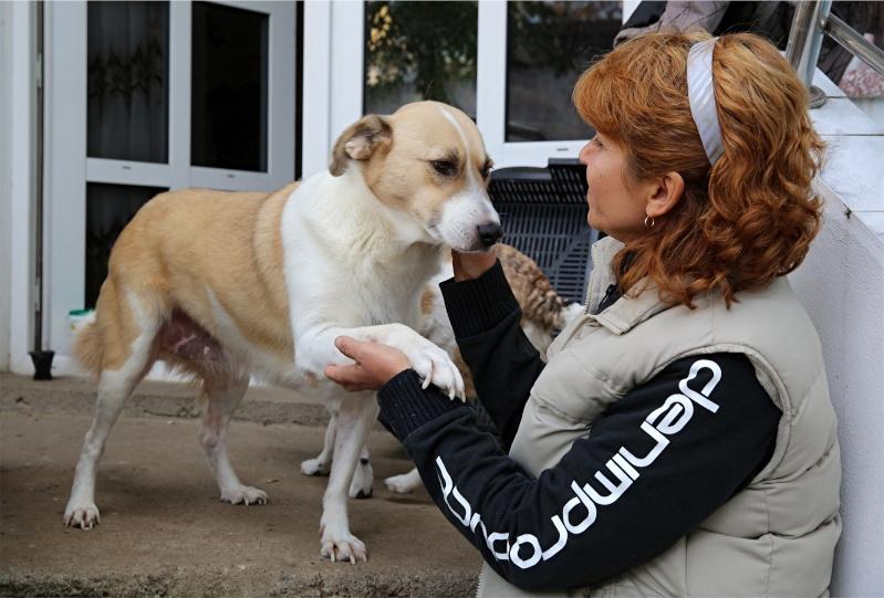 Murmurica, sauvetage de Sanda, chienne née en 2011 Murmur17