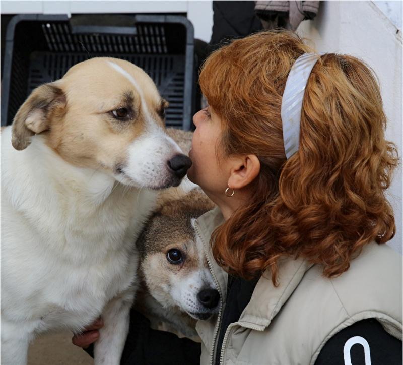 Murmurica, sauvetage de Sanda, chienne née en 2011 Murmur19