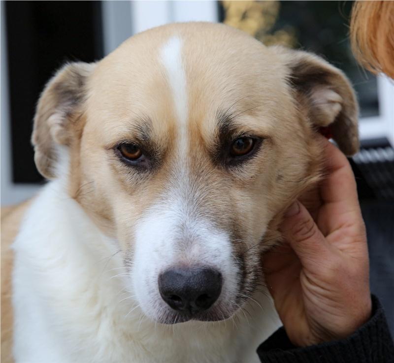 Murmurica, sauvetage de Sanda, chienne née en 2011 Murmur21