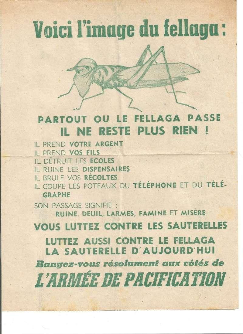 Les fellouzs  Fellou10