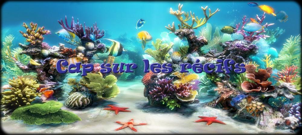 Cap sur les récifs