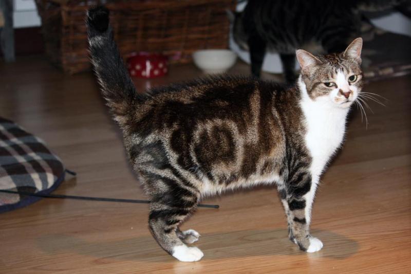 Un Noël pour les Handi'cats 48056010