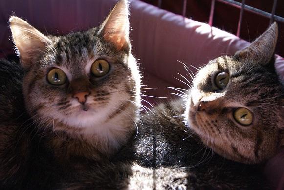 Un Noël pour les Handi'cats Dsc03712