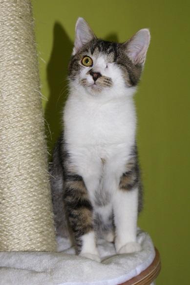 Un Noël pour les Handi'cats Dsc03810