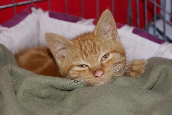 Un Noël pour les Handi'cats Dsc04110