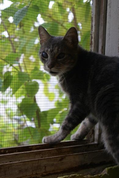 Un Noël pour les Handi'cats Dsc04918