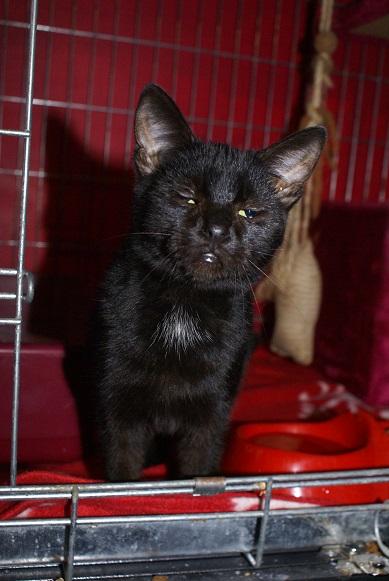 Un Noël pour les Handi'cats Dsc04919