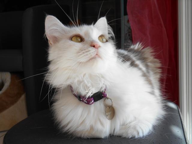 Un Noël pour les Handi'cats Dscn0610
