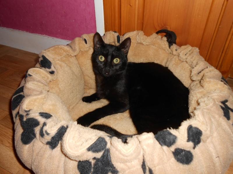 Un Noël pour les Handi'cats Dscn4210