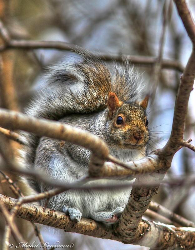 écureuil. W4_ton10