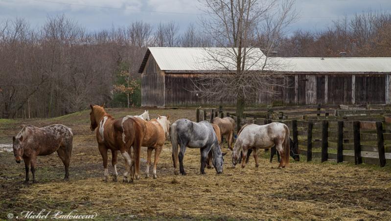 Quelques chevaux... W7_mod10