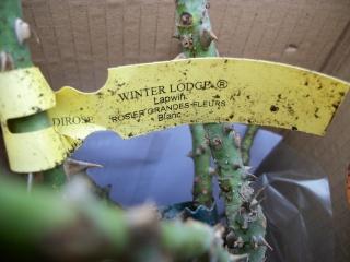 Rosa Winter Lodge Photo_21