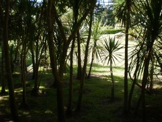 Le Jardin Georges Delaselle de l'ile de Batz !!! Photo_75