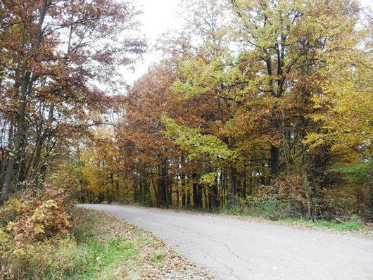 Jesen nad našim selom Pictur12