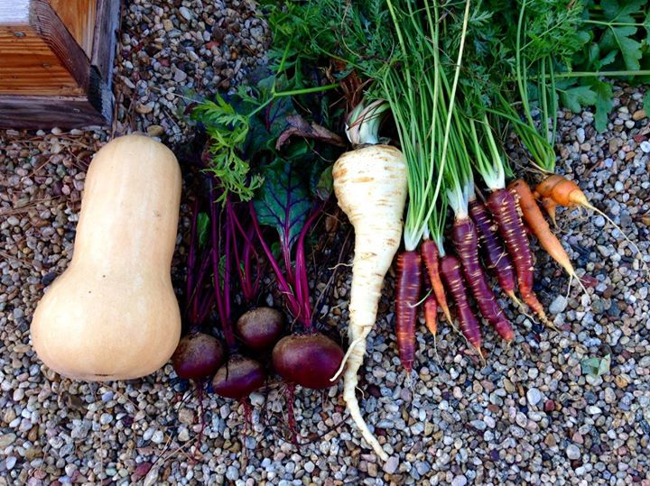 What are you eating from your garden today? - Page 3 Veggie10