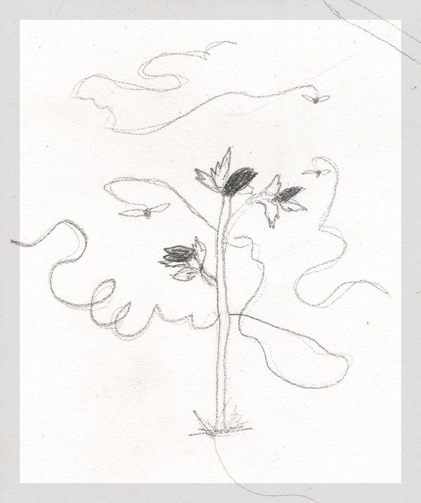 Humanisme, Renaissance et... Ophrys ! Dessin10