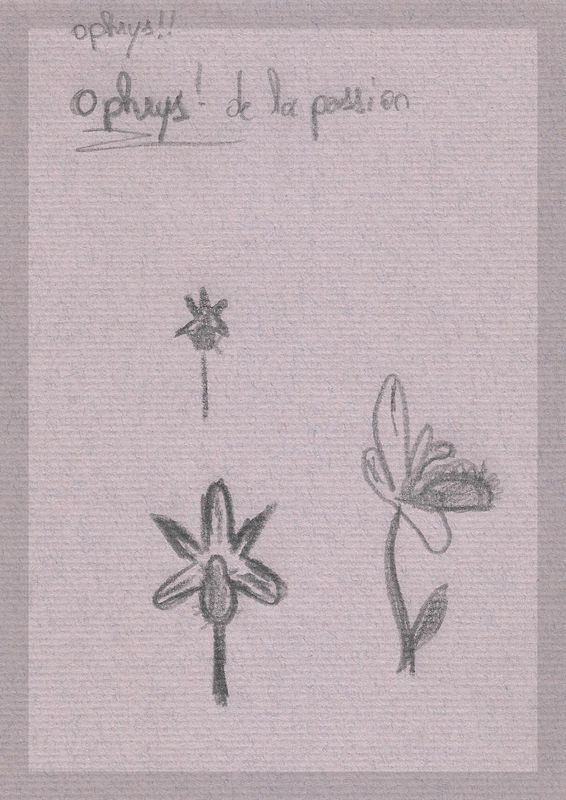 Humanisme, Renaissance et... Ophrys ! Dessin15