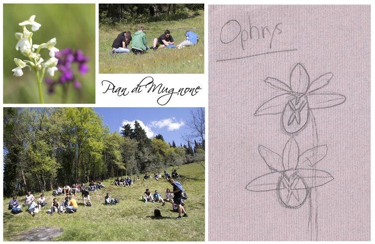 Humanisme, Renaissance et... Ophrys ! Pian_d20
