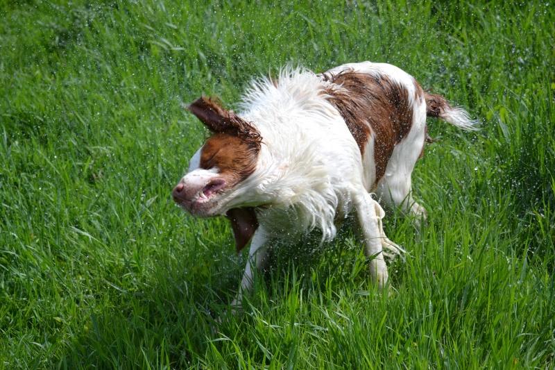 Photographie d'animaux - conseils pour devenir un pro ! Dsc_0310