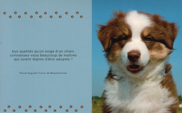 citations sur le chien 777e1010