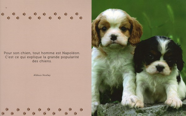 citations sur le chien 8080bb10